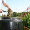 Small_thumb_d71b42dbbeb412c0929c_composting
