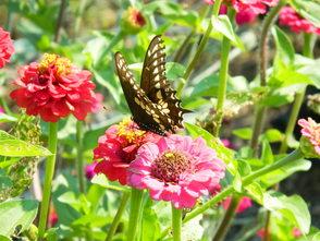 Carousel_image_b832035d50c5029e430b_butterfly__1_
