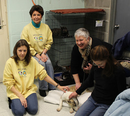 Lending a paw to furry friends in need