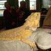 Small_thumb_04f27b82de395a8858a0_lizard1
