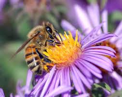 f232a264f3ba0cd88ab3_bees.jpg