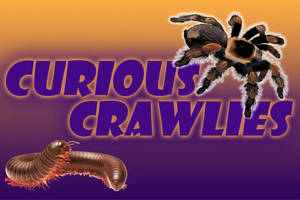 Curious Crawlies