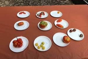 Carousel_image_0214cc35f18d1d44358a_d6b772a9fd220fb7a27c_tomato_contest_2016_1