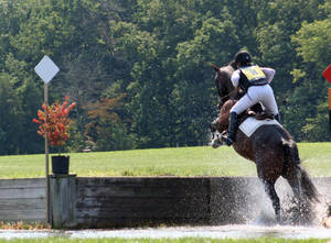 Carousel image 050a80f3080f68b85756 bucks county horse trials sept 10 2017067