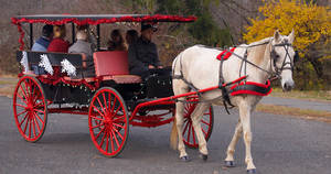 Carousel image 05cf664fb60c49fc7542 horse and carriage 2016
