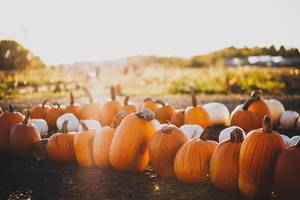 Carousel_image_0783cb3dcb97a6c1f8cc_pumpkins_from_unsplash_