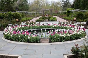 Carousel_image_079616ec677e3b7a0c15_rose_garden_in_bloom_copy