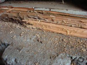 Carousel image 08dfdfccfad2dee53962 ter 2