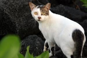 Carousel_image_0e5db91bc1635fc13e9b_1280px-feral_cat_1