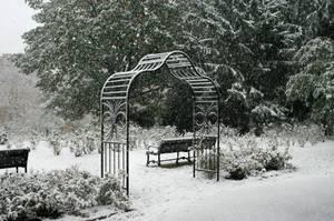 Carousel_image_0ec6740d08c6cf273397_rose_garden_snow