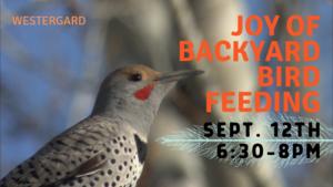Carousel_image_1103c5319421650c711e_joy-of-bird-feeding