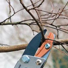 Carousel_image_1330f862e327153915b5_pruning