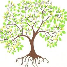 Carousel_image_1371ae8f412aeff2599a_7ac2c9fa1d0795e00c6c_landmark_tree