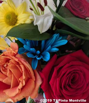 Carousel_image_137e639683429206a65c_garden_club_flowers