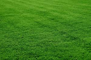 Carousel_image_14178d2c601f0cd6e50c_grass