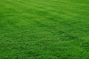 Carousel image 14178d2c601f0cd6e50c grass