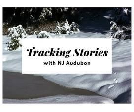 Tracking Stories.jpg