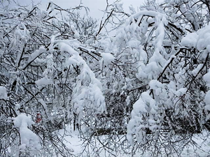 Carousel_image_1a21f1558caf8d142417_weathernoreaster3-22-18