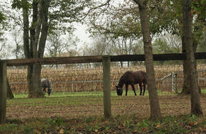 Carousel image 1b4cd357887b31167cfe mylestone equine rescue 17021
