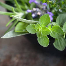 Culinary Herb Garden Class at Reynolds Garden Shop on Saturday, February 9