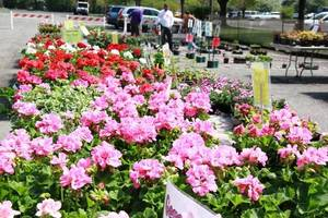 Carousel_image_1f1dd5cd526be2f09d25_plant_sale