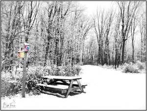 Carousel image 202d52d2206602d575e2 snow snyder bird logo