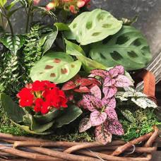 Blooming Houseplant Basket Workshop