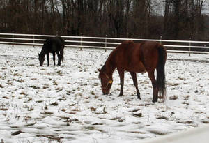 Carousel_image_238231c0c7322db14dd3_horses_in_snow