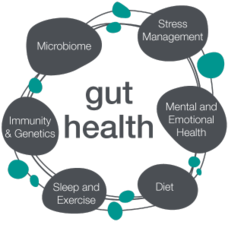 gut-health-image.png