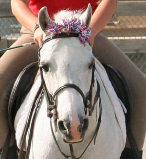 Carousel image 290cad12de8046637e58 senior horse2