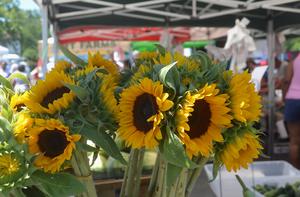 Carousel_image_292470499c59517ff676_farmers_market_-_sunflowers