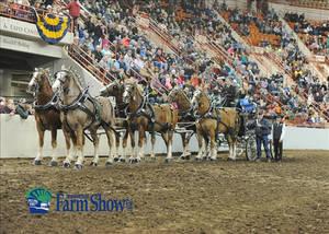 Carousel image 2afce130cd5bac586b3e penn farm show horses346