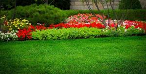 landscape-lawn-1.jpg
