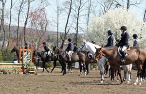 Carousel image 33d55f60d2d2ed38a999 horse show