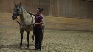 Carousel_image_3586984f9f2d65520339_cinnamon_rescue_horse