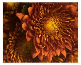 Carousel_image_3dfe3314431dbad5964b_reed_flowers_1_copy.psd_1_