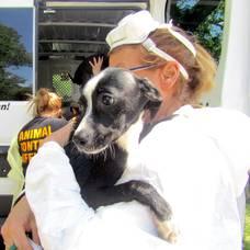 Carousel image 425e62b415a4828962f9 cb383b6417f549800e76 8162ccf60c700e3c3829 roselle animal cruelty case 3