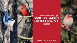 Carousel_image_456ac1643038f9395130_walk_and_bird_count