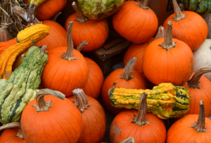 Carousel_image_4acbafc79ec23502ef7e_pumpkins_at_the_farmer_s_market