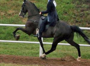 Carousel_image_524254de5c1a5324d247_tenn_walking_horse