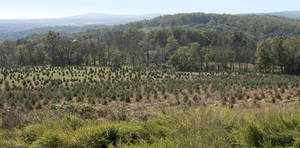 Carousel_image_55461e2e97469b45d422_charlie_brown_christmas_tree_farm_view_from_top_of_hill_panarama
