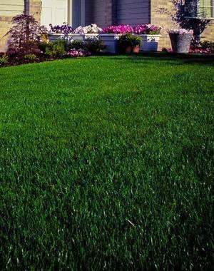 Imperial lawns pic.jpg