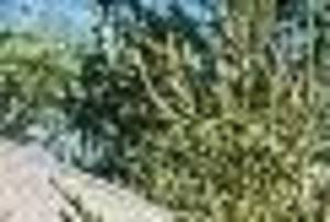 Carousel_image_591ad82ddf4b421274c7_cd1bf941ea5f2efe44e8_102386566_1
