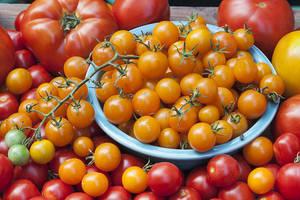 Carousel image 5acbef635b7df6596332 bonnie plants tomato beauty shot horiz red2 300dpi
