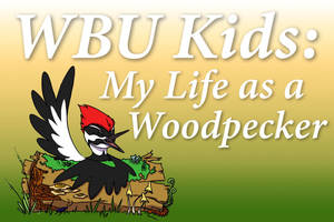 Find out what it's like to be a woodpecker!