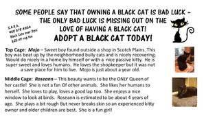 Carousel_image_620abddeacf48f8bba9e_black_cat
