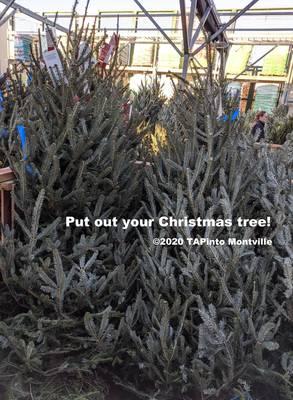Christmas tree pickup ©2020 TAPinto Montville.jpg