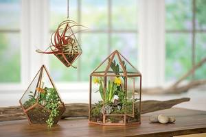 Carousel_image_7384934a9f6ed4e07b65_terrariums_photo_credit_gardeners_supply_company__1_