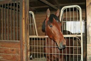 Carousel image 73adea4f4fb17aa08e67 horse in stall