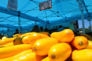Scotch Plains Farmers Market - Squash.png